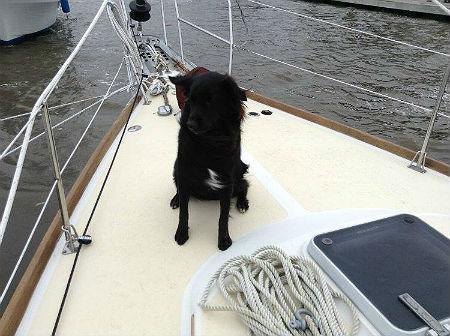 Meet Goose on Sailing Yume