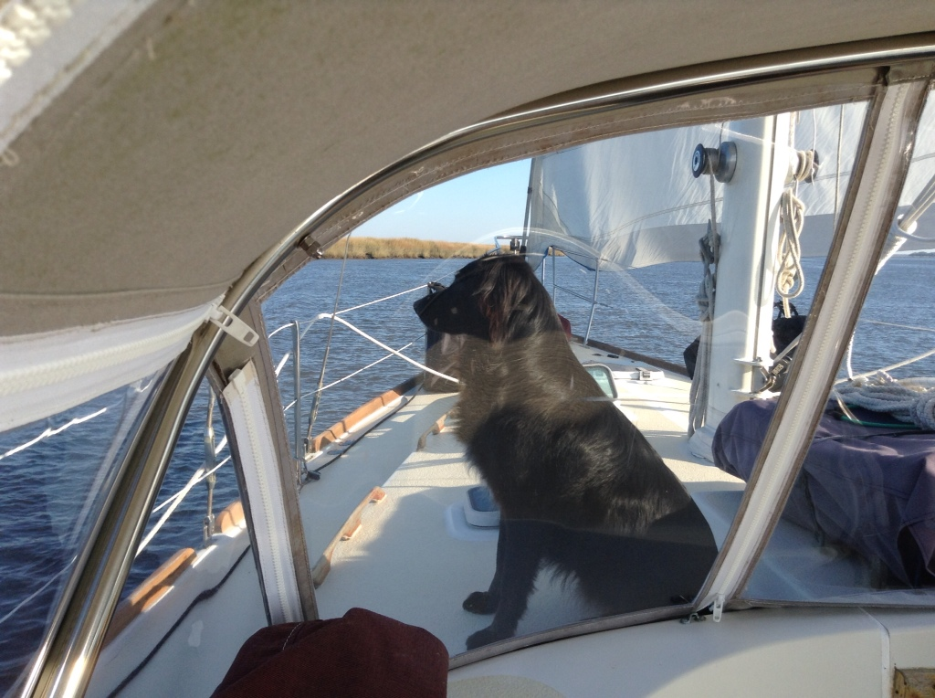 happy sailing dog
